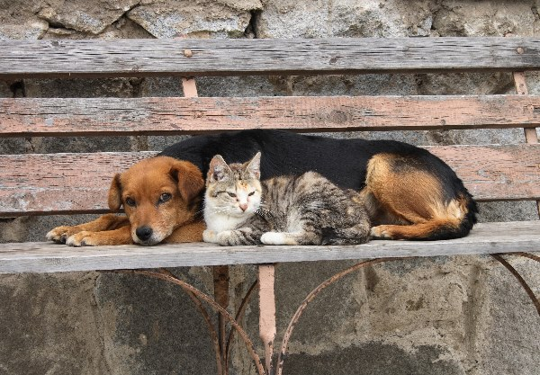Spay or neuter pets